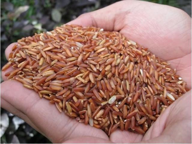 Sử dụng gạo lứt để giảm cân tiết kiệm được rất nhiều chi phí